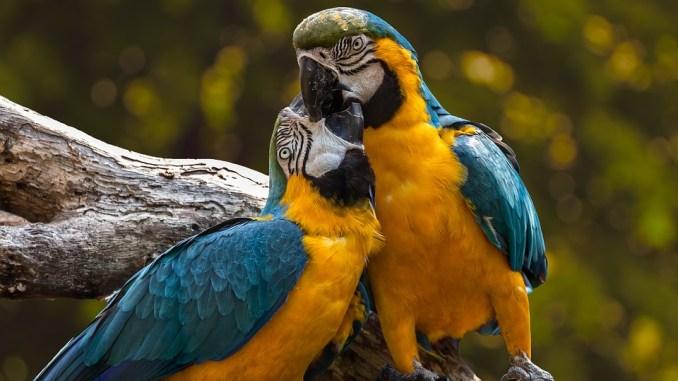 papageienarten-bild
