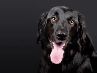hund-sprayhalsband-black
