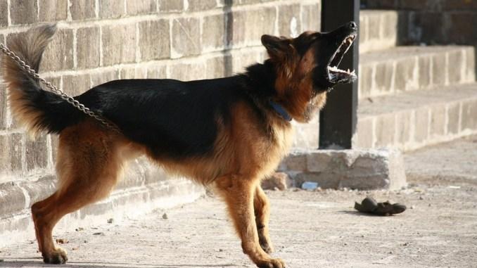 hund-bett-klingel