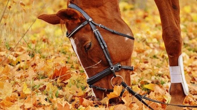 pferd-futter