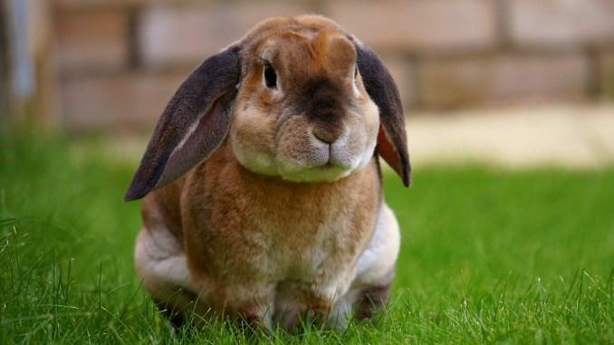 Ganz und zu Extrem Kaninchenfutter – Was dürfen Hasen essen? @LQ_73