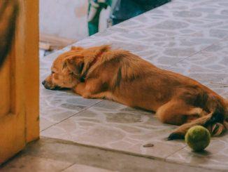 Bachblueten Rescue Tropfen für Hunde beruhigen diesen