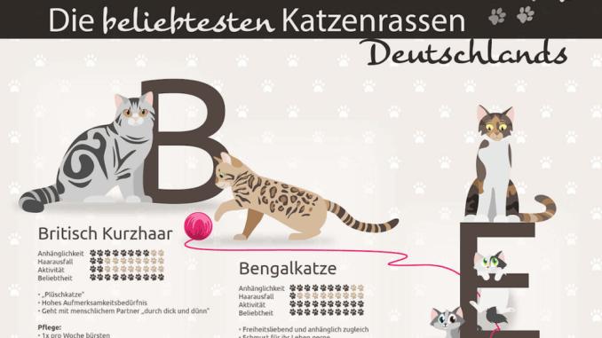 Infografik Katzenrassen