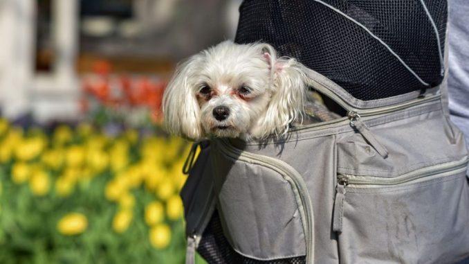 rucksack-mit-hund