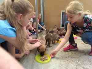 Kids & Dogs (7-10 Jahre) @ Tierheim Siegen | Siegen | Nordrhein-Westfalen | Deutschland