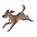 Welcher Typ Hund ist dein Hund (Alle vier Typen) (4/4)
