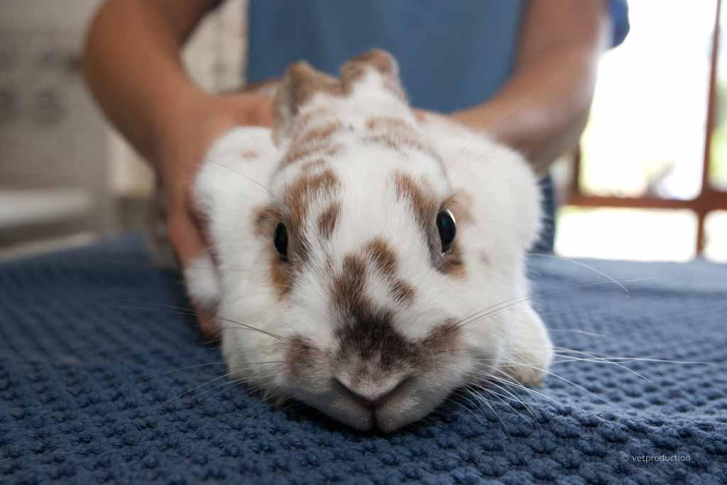 Juckreiz beim Kaninchen | Definition, Ursachen, Symptome ...