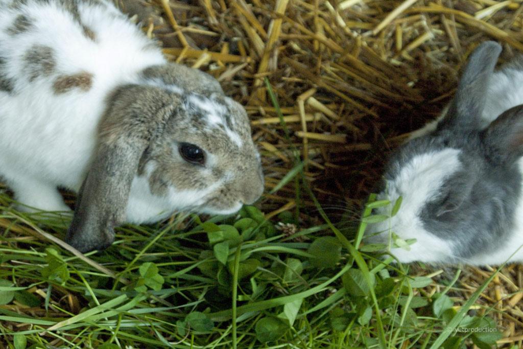 Blähungen beim Kaninchen | Definition, Ursachen, Symptome ...