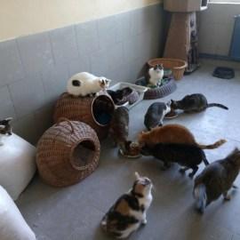 Katzen bei ASIPA