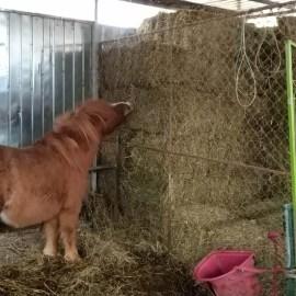 """Unser Pony """"Pony"""""""