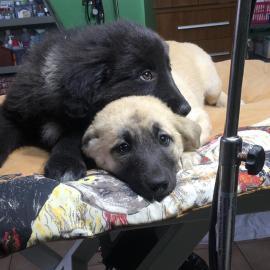 Pongo und Perdi suchen ein Zuhause