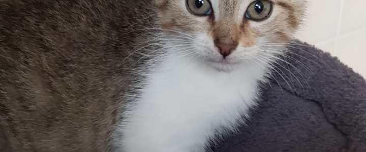 3 kleine Katzenkinder sind noch auf der Suche nach ihrem zu Hause