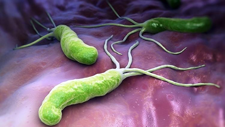 Ecología microbiana: microbios intestinales humanos asociados con la obesidad