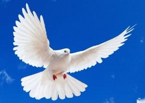 """""""El pájaro blanco que trajo paz"""""""
