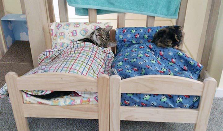 Refugio de gatos recibe donaciones de Camas de muñecas