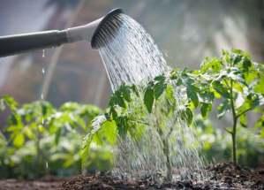 Hallan que las raíces de las plantas oyen el agua