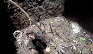 Al salvar este perro ven como el animal dice gracias