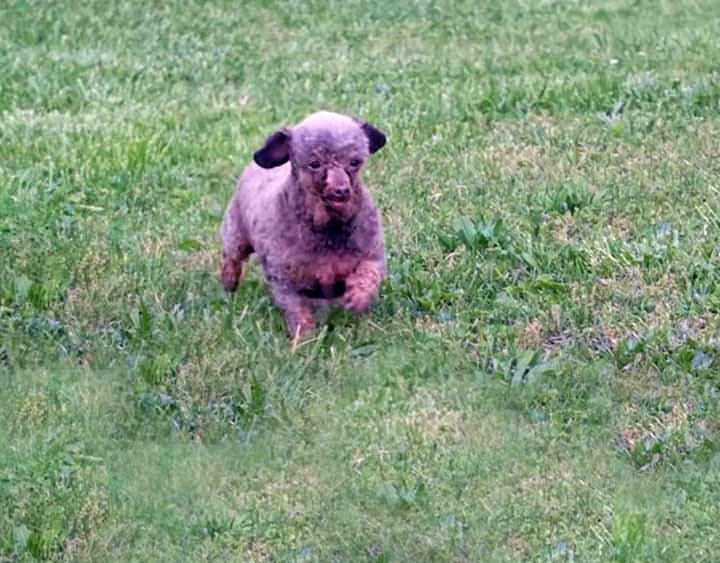 Símbolo del maltrato animal, una perrita es liberada