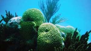 Especies de Coral se adaptan al cambio climático