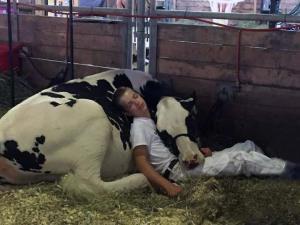 Adolescente agotado duerme con su vaca lechera