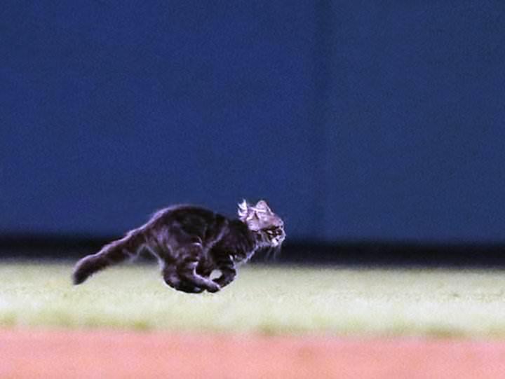Este gatito interrumpió un partido de béisbol