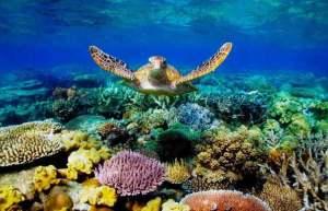Gran Barrera de coral de Australia – esperanza