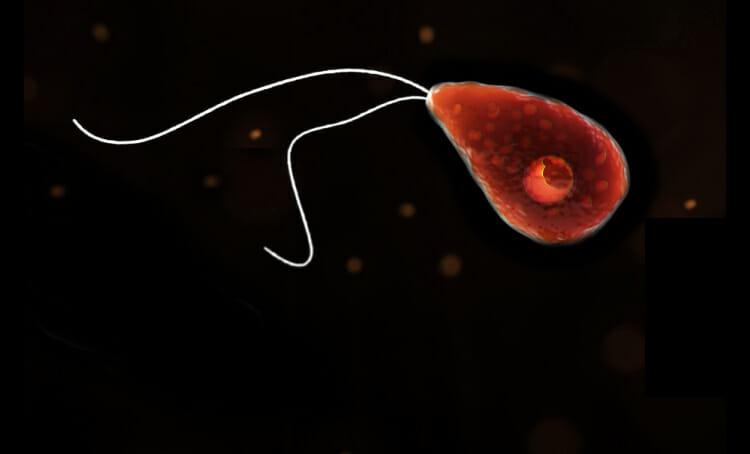 Ameba come cerebro - 129 casos reportados en EE.UU