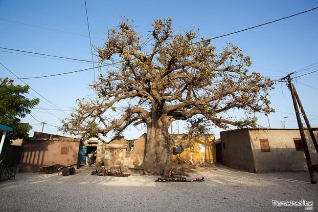 baobab en joal fadiouth senegal