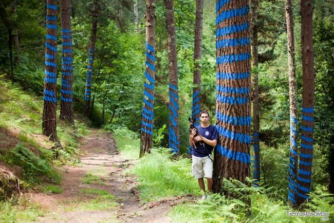 líneas en el bosque de oma