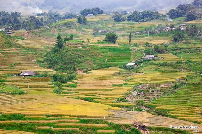 arrozales trekking por sapa