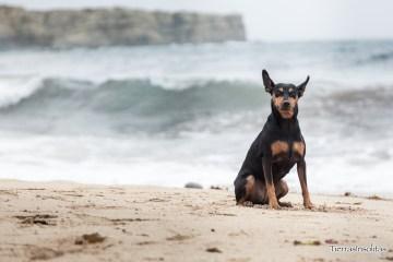 playas para perros en portugal