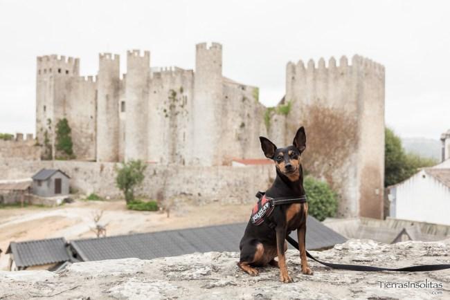 castillo óbidos viajar con perro a portugal