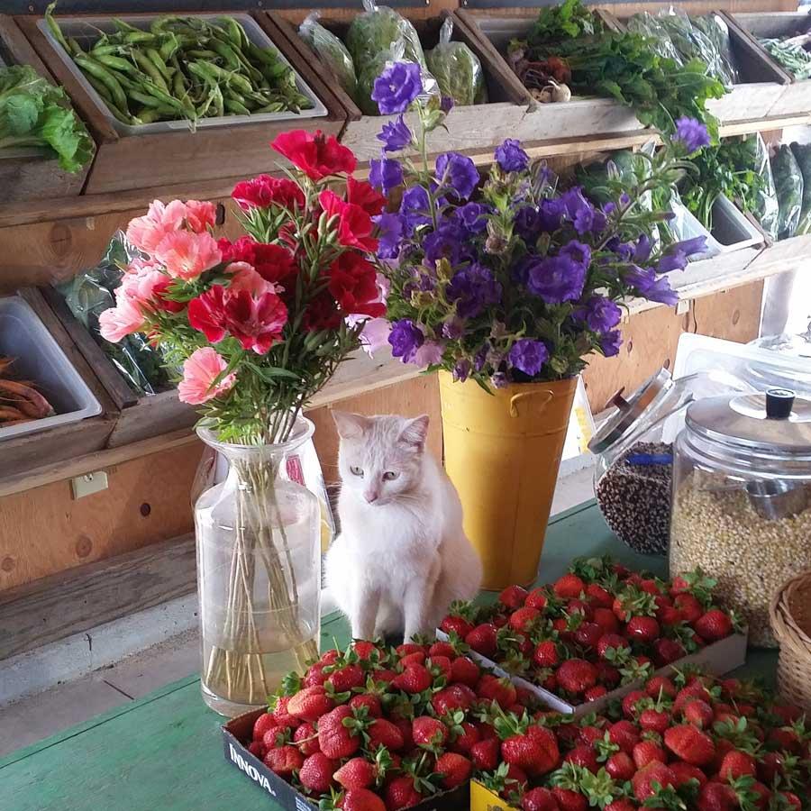 Farm Fresh Flowers San Francisco