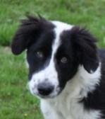 Lassie vorne