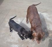 Ace und Anja