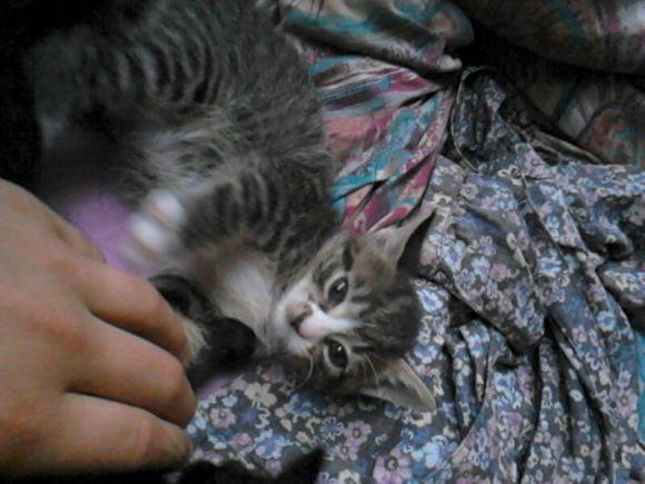 Junges Kätzchen in Oberzell vermisst