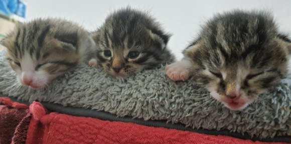 Baby's von Katzendame Maja😍😍😍