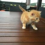 Katzenbaby Gizmo