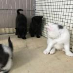 Katzenkindergarten 2017 sucht ein Zuhause