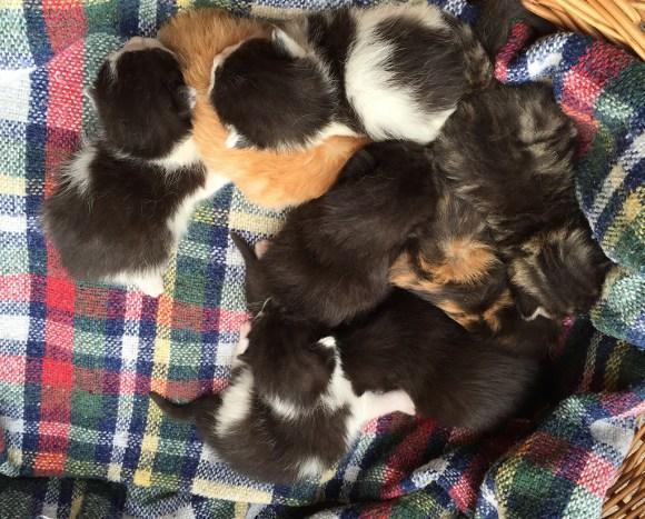Katzenkindergarten