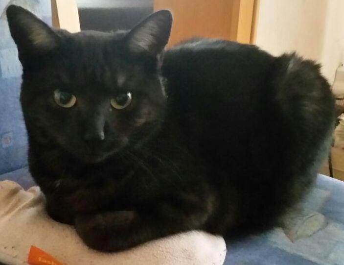 Katze Luna aus Kleinlüder vermisst