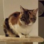 Polly aus Fulda vermisst