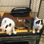 Unser Katzenkindergarten sucht ein Zuhause