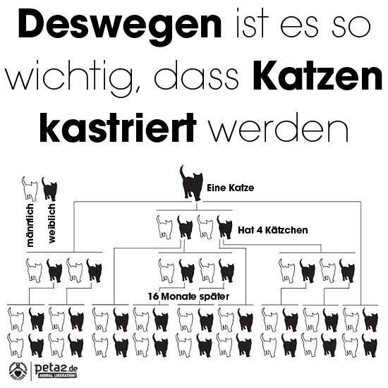 Kastration Tierschutzverein Penzberg Und Umgebung Ev