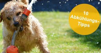 Erfahre in unserem Blogbeitrag 10 Tipps zum Abkühlen von Hunden