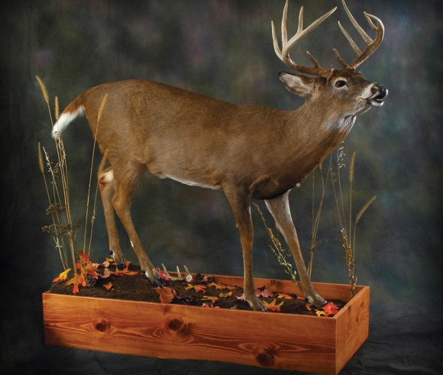 Welcome To Tietz Taxidermy And Wildlife Art Taxidermy Art And Photography Have Long Been Passions Of Mine My Training As A Commercial Artist And Over