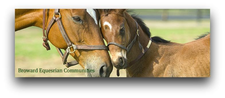 South Florida Equestrian Homes