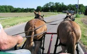 horsebutts