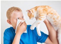 alergie_pisica