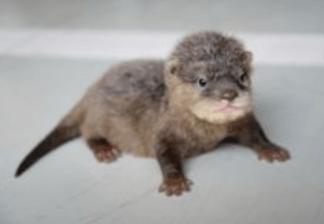 10 Pui De Animale Cu Care Ne Intalnim Primavara Tigrisorro